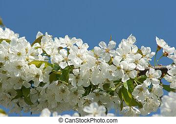 цветок, дерево