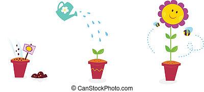 цветок, сад, подсолнечник, -, рост, stages