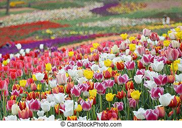 цветы, весна, задний план