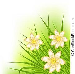 цветы, весна, трава, зеленый, задний план