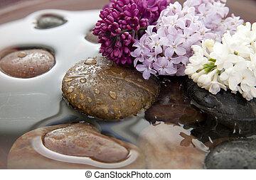 цветы, воды, rocks