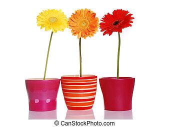 цветы, красочный, весна