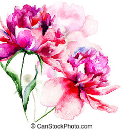 цветы, пион, красивая