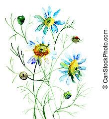 цветы, camomile