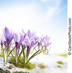 цветы, snowdrops, весна, крокус