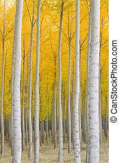 цвет, желтый, осень, trees, падать, blazing, стоять