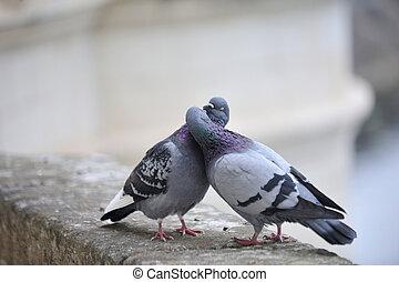 целование, pigeons