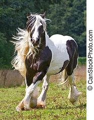 цыганский, лошадь