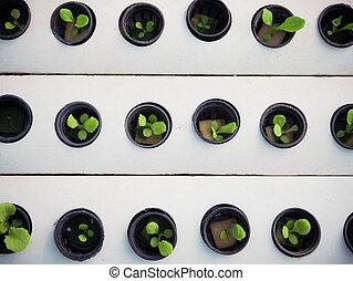 черный, бизнес, немного, pot., растение, гидропоника, farm., зеленый, concept., сельское хозяйство