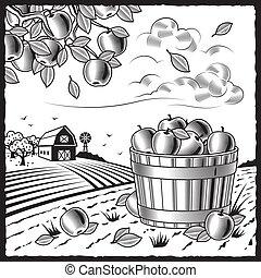 черный, уборка урожая, пейзаж, яблоко