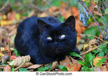 черный, cat.