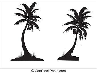 черный, palms