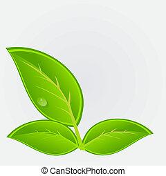 экологическая, вектор, plant., иллюстрация, значок