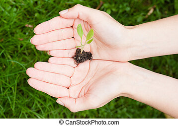экологический, концепция