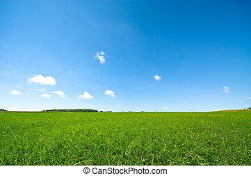 яркий, синий, свежий, небо, трава, зеленый