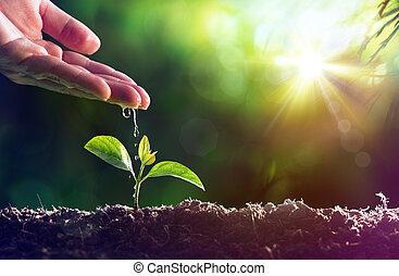 -, полив, новый, забота, растение, жизнь