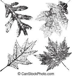 4, шероховатый, leaves, падать