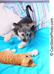 animals, собака, вместе, кот, постель, главная, playing