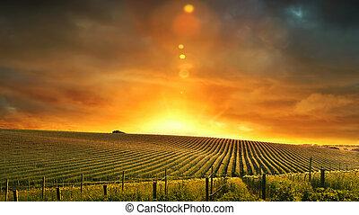 barossa, закат солнца