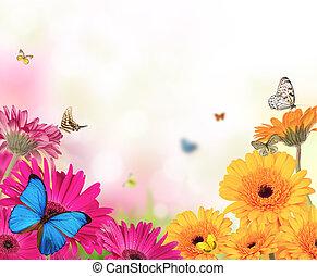 butterflies, цветы, gerber