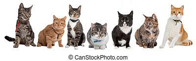 cats, группа