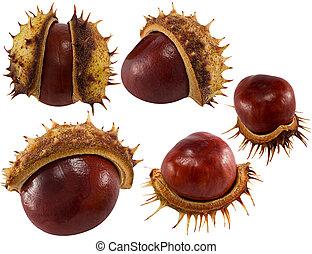 chestnuts, белый, дизайн, isolated