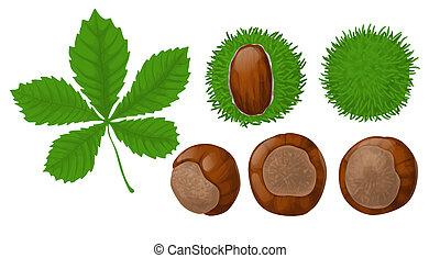 chestnuts, лист