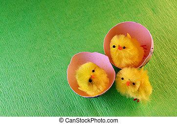 chicks, пасха, три
