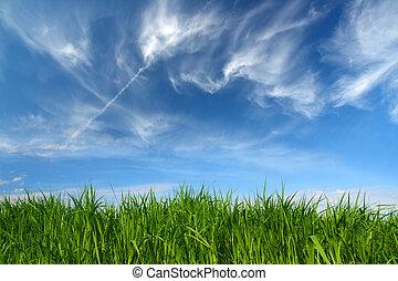 clouds, небо, зеленый, под, трава, кудрявый