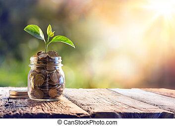 coins, растение, экономия, выращивание