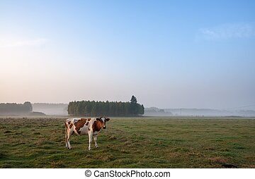 cows, туманный, восход, выгон