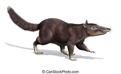 cronopio, доисторический, -, млекопитающее