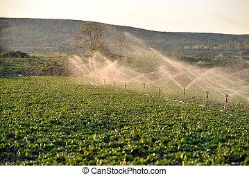 crops, поле, полив, разбрызгиватель