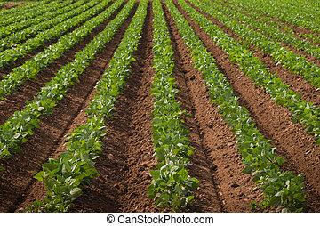 crops, сельскохозяйственное, земельные участки, ряд
