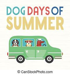 days, лето, собака