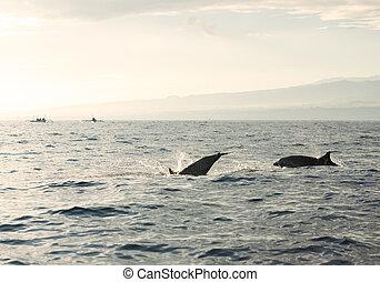 dolphins, тихий океан