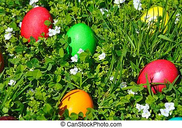 eggs, пасха, трава, зеленый