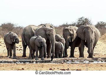 elephants, мутный, пасти, африканец, водопоя, питьевой