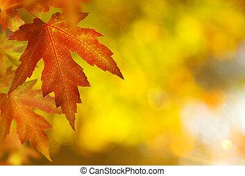 fall., задний план, осень