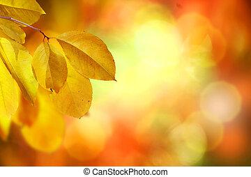 fall., осень