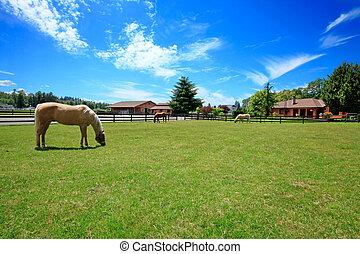 fence., лошадь, ранчо, дом