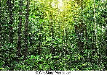 forest., плотный