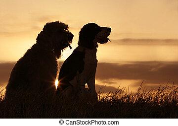 friends, закат солнца