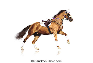 galloping, игривый, лошадь, isolated
