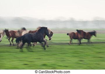 galloping, размытый, horses, выгон