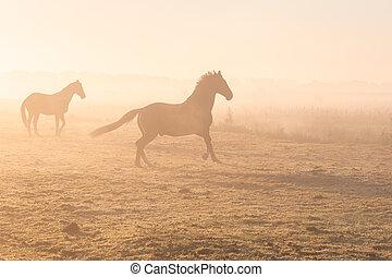 galloping, туманный, horses, выгон