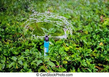 garden., воды, разбрызгиватель, за работой