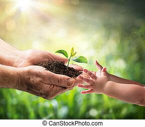 giving, -, новый, защита, ребенок, поколение, старый, окружающая среда, растение, человек, молодой