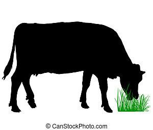 grazing, корова