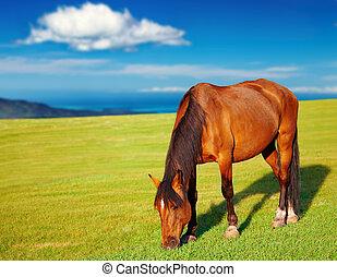 grazing, лошадь